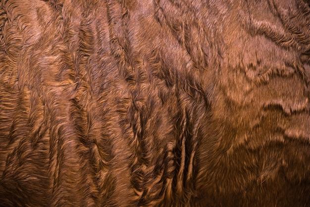 Futro konia z bliska. brązowa tekstura skóry konia rodowodowego.