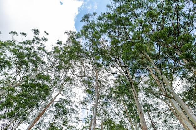 Gaj leśny. drzewa w parku na wyspie sri lanka.