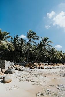 Gaj palm na tropikalnym brzegu nad morzem