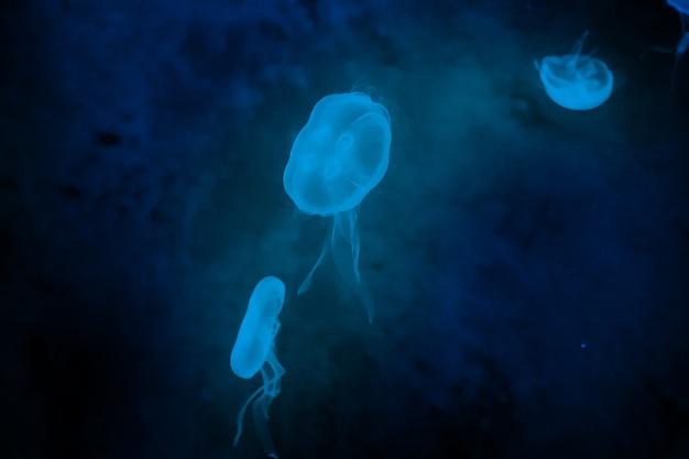 Galaretka rybka w podświetleniu