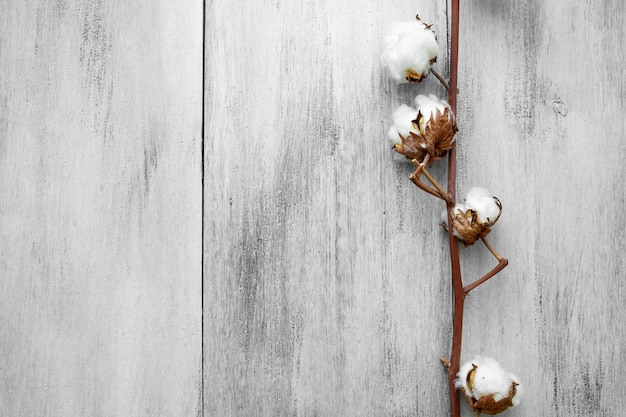 Gałąź bawełny na jasnym tle drewnianym widok z góry (zbliżenie)