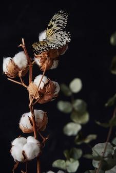 Gałąź bawełny z pięknym motylem siedzi na kwiatku.