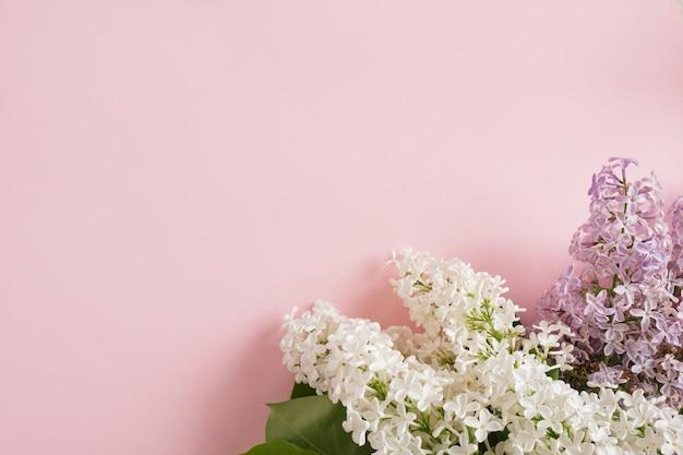 Gałąź bieli w fioletowym bzu na różowym tle kopia przestrzeń widok z góry