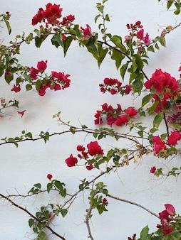 Gałąź czerwonych kwiatów, liście na neutralnej beżowej betonowej ścianie