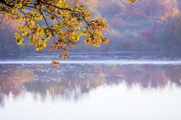 Gałąź dębu z jesiennych żółtych liści nad rzeką z czystą wodą