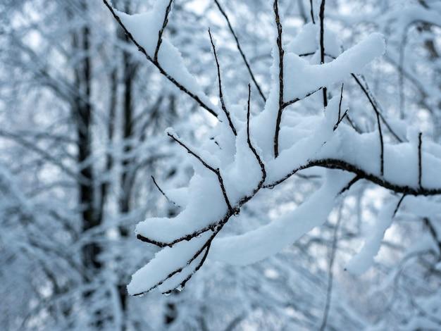 Gałąź drzewa całkowicie pokryta śniegiem w ciągu dnia w lesie