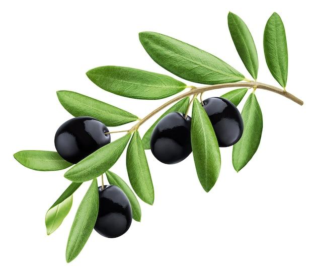 Gałąź drzewa oliwnego, czarne oliwki z liśćmi na białym tle na białym tle ze ścieżką przycinającą