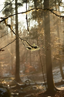 Gałąź drzewa w lesie otoczonym zielenią pokrytą śniegiem pod słońcem