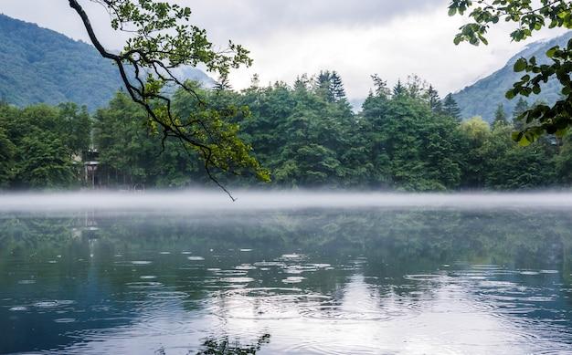 Gałąź drzewa wisi nad dolnym krasowym błękitnym jeziorem tserik-kel w pochmurną mglistą pogodę, na powierzchni wody koła od kropel deszczu, republika kabardino-bałkarska, rosja