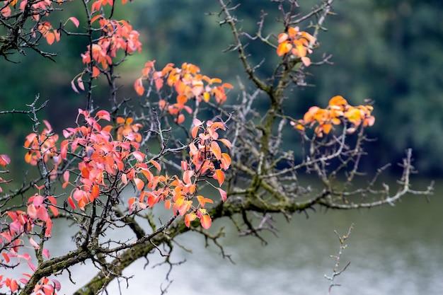 Gałąź drzewa z czerwonymi i pomarańczowymi liśćmi jesienią na tle rzeki