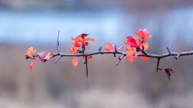 Gałąź drzewa z czerwonymi jesiennymi liśćmi w pobliżu rzeki na rozmytym tle