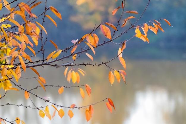 Gałąź drzewa z kolorowych liści jesienią nad rzeką z czystą wodą