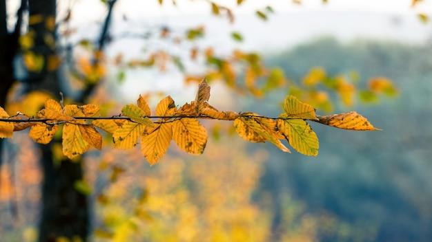 Gałąź drzewa z suchymi liśćmi w lesie na drzewie na rozmytym tle przy słonecznej pogodzie