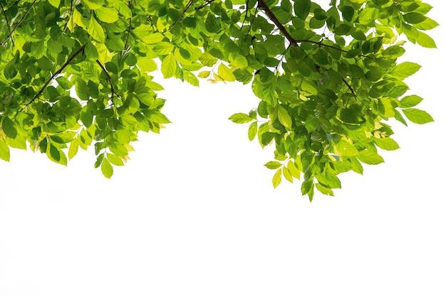 Gałąź drzewa z zielonym liściem