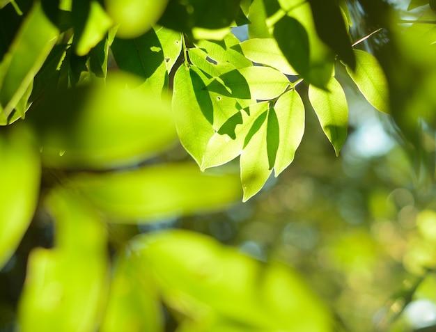Gałąź drzewa z zielonymi liśćmi w słoneczny dzień wiosna