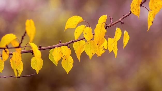 Gałąź drzewa z żółtymi jesiennymi liśćmi na rozmytym tle w lesie