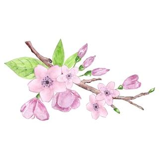 Gałąź kwiat wiśni akwarela