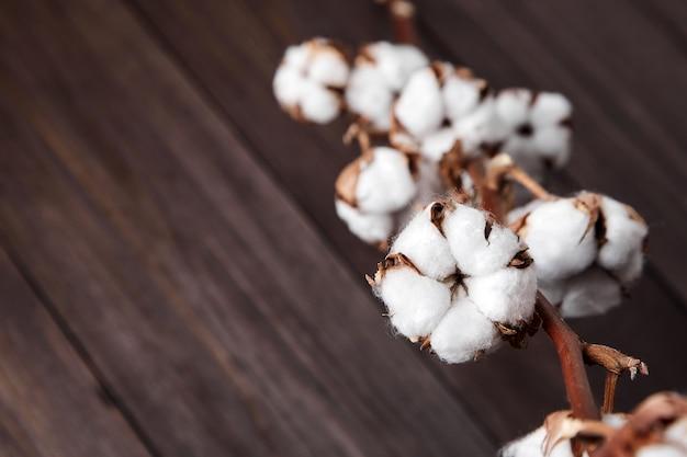 Gałąź kwiatów białej bawełny na brązowym tle drewnianych