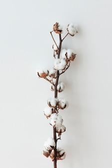 Gałąź kwiatu bawełny