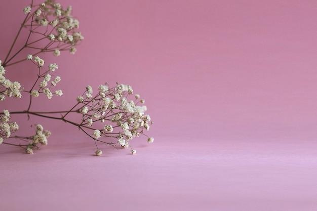 Gałąź kwiatu gipsówki na różowym tle