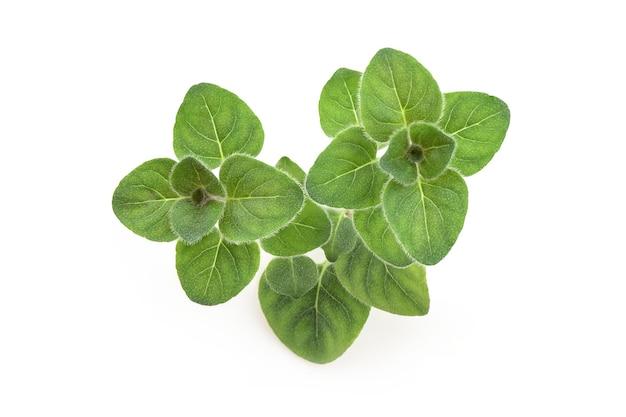 Gałąź oregano i zielone liście na białym tle na biały ze ścieżką przycinającą. widok z góry, leżał płasko.