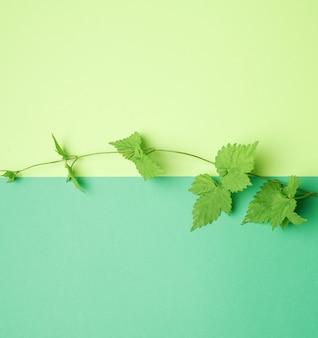 Gałąź roślin z zielonymi liśćmi na zielonym tle, widok z góry