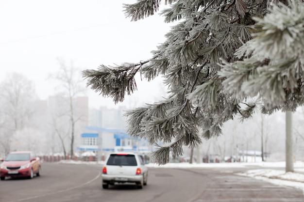 Gałąź sosny nad zimową drogą