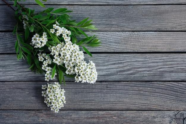 Gałąź z białymi kwiatami spirea i zielonymi liśćmi na szarym drewnianym tle, kopia przestrzeń