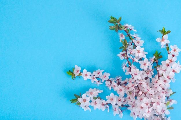 Gałąź z delikatnymi białymi i różowymi kwiatami