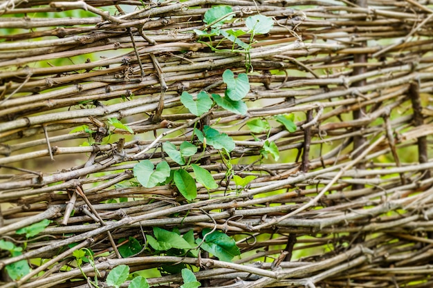 Gałąź z liśćmi i suche gałąź płotowy tło