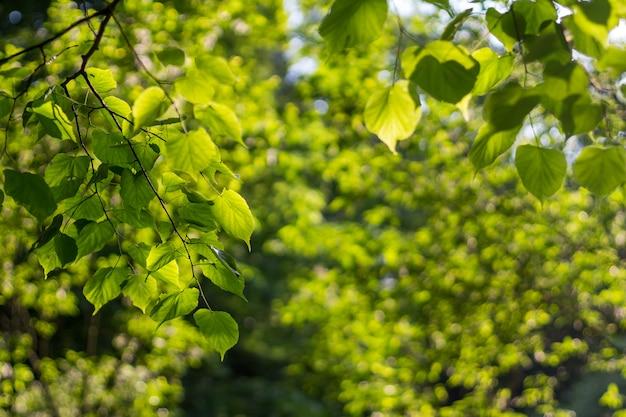 Gałąź z liśćmi na zielonym tle