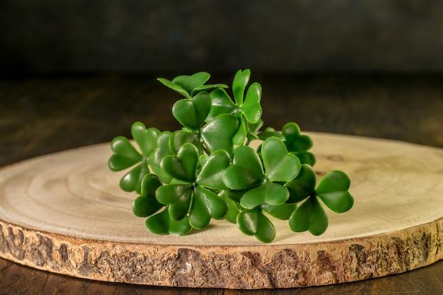 Gałąź zielony shamrock na drewnie