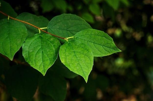 Gałąź zielonych letnich liści