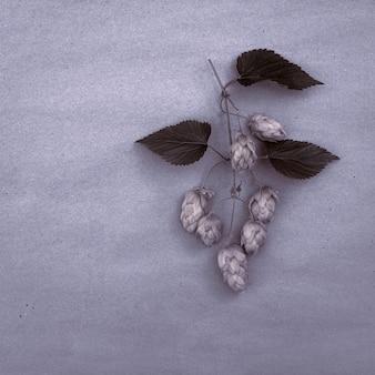 Gałązka chmielu z szyszkami na pastelowym tle z miejscem na kopię