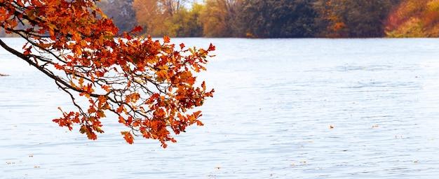 Gałązka dębu z suchymi jesiennymi liśćmi nad rzeką