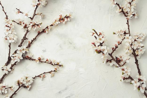 Gałązka kwiatów wiśni na lekkiej kamiennej powierzchni. leżał płasko, widok z góry