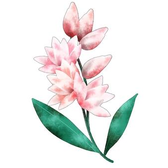 Gałązka kwiatu tuberozy