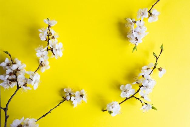 Gałązka kwiatu wiśni, wiosna