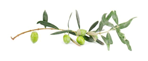 Gałązka oliwna na białym tle. zielone oliwki z liśćmi.