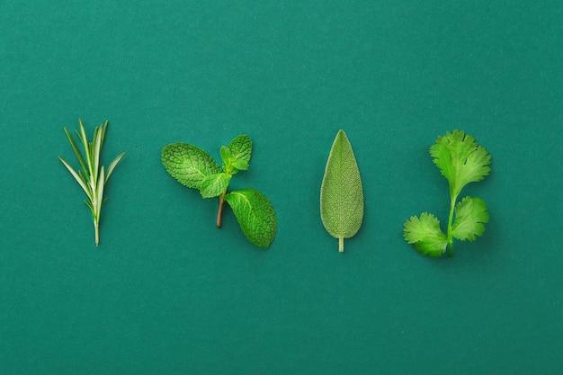 Gałązka rozmarynu, liście mięty, szałwii, kolendry na kolorowym tle