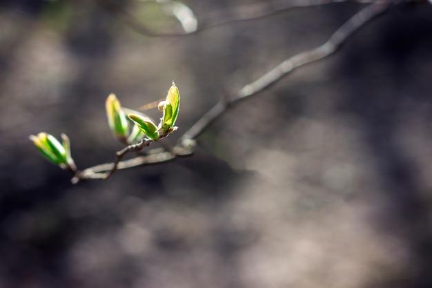 Gałązka wiśni dociera do słońca