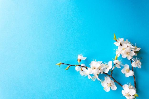 Gałązka wiśniowych kwiatów, wiosna