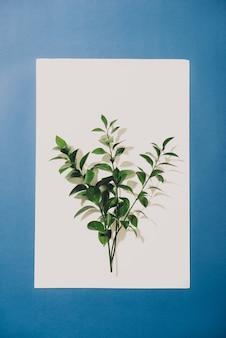 Gałązka z zielonymi liśćmi na białym tle