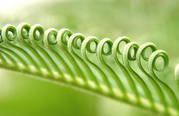 Gałązka ze skręconymi zielonymi liśćmi, zbliżenie