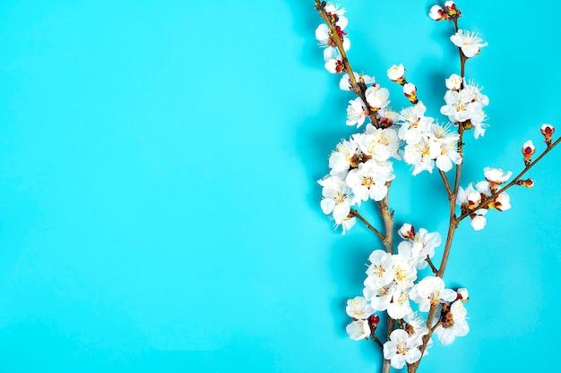 Gałązki drzewa morelowego z kwiatami na niebieskim tle.