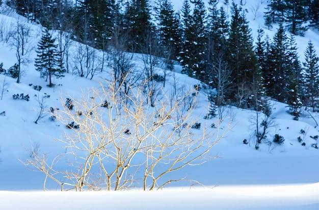 Gałązki drzewa na tle górskiego wzgórza zima.