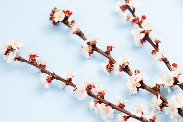 Gałązki drzewa owocowego z kwiatami na niebiesko