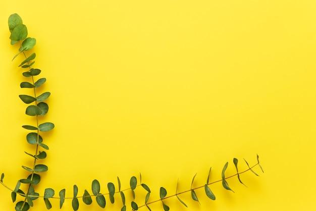 Gałązki eukaliptusa na jasnożółtym tle. leżał płasko, kopia przestrzeń