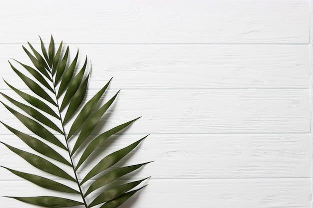 Gałązki palmowe na kolorowym tle widok z góry z miejscem na tekst. zdjęcie wysokiej jakości