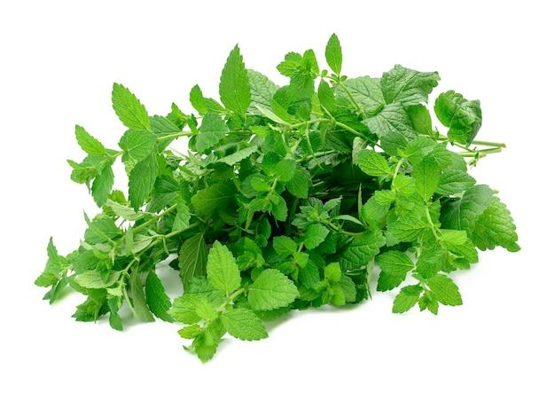 Gałązki zielonej mięty z liśćmi na białym tle, pachnące przyprawy do deserów i koktajli, zbliżenie